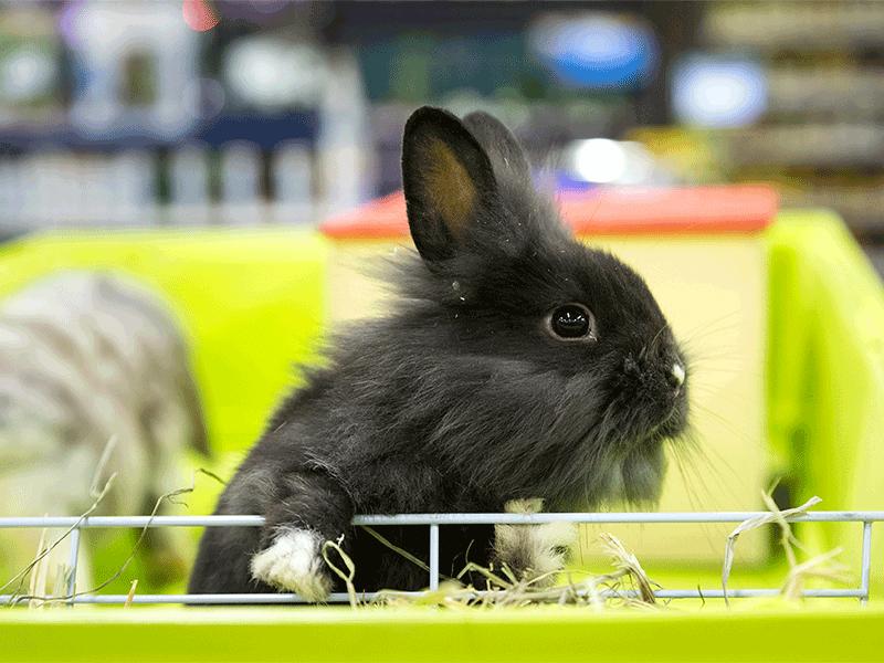 Jardin d cor jardinerie fleuristerie animalerie for Decoration jardin lapin